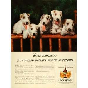 Alcohol Fox Terrier Puppies Dogs   Original Print Ad
